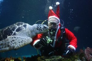 Winactie margje.nu Kerst Seaworld